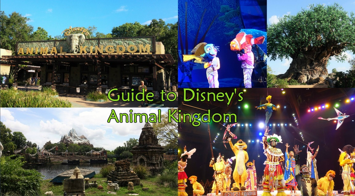 Guide to Animal Kingdom