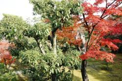 Honmaru Garden