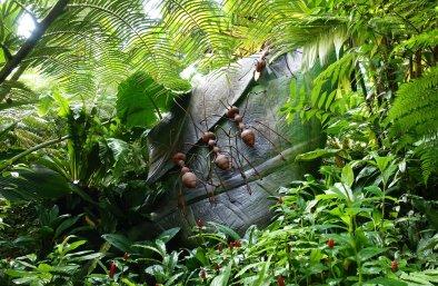 Weaver Ant