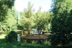 Rådyr, Queen's pond Dronningparken